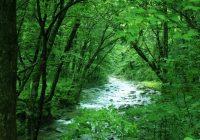森の中の清流